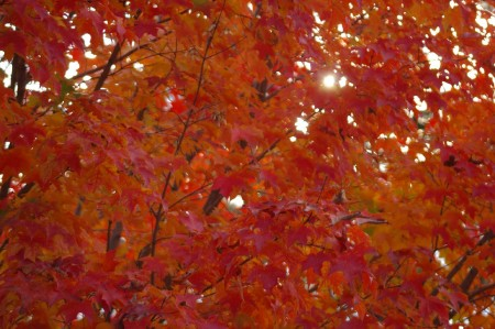 Autumn Color 3