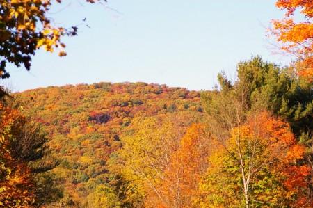 Autumn Color 4