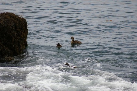 Ducks !!