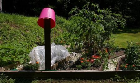 Garden - after weeding