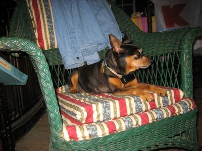 new-doggie-016.JPG